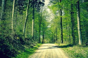 Road in the forest at springtime
