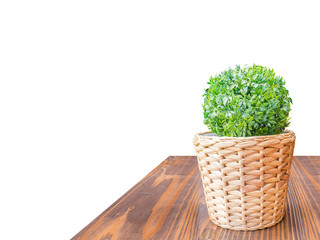 Wood Table top green bush in wicker basket isolate on white back