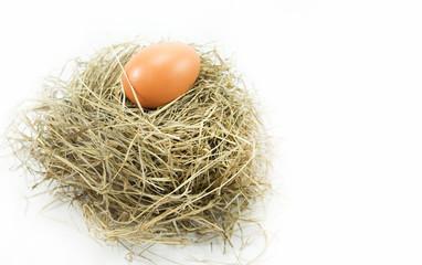 Egg in the nest