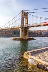 Le cygne sur les quais de Rhône