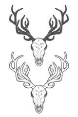The skull of a deer. The two versions.