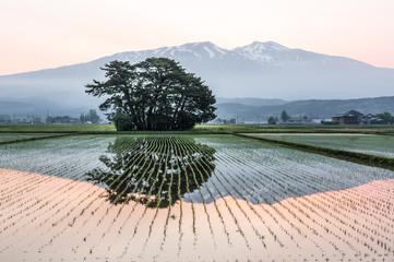 水田と鳥海山
