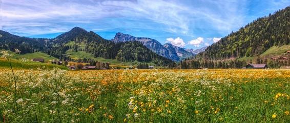 Champ de fleurs printanière dans les alpages suisse,