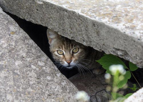 Stray cat peeking from the slit