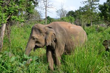 little gray elephant hiding in green grass in park