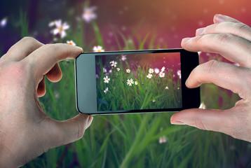 Daisies photos on a smartphone