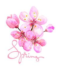 Watercolor illustration -- spring cherry blossom