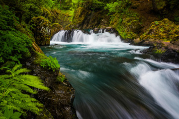 Ferns and cascades on the Little White Salmon River below Spirit