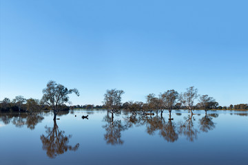 Flood - Trees In Water