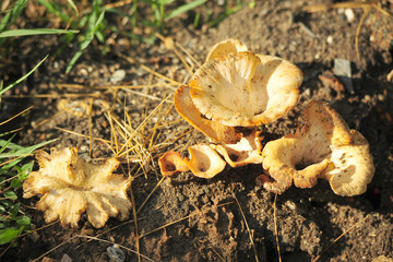 Mushrooms on the ground