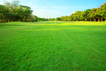 Photo sur Aluminium Herbe beautiful morning light in public park with green grass field an