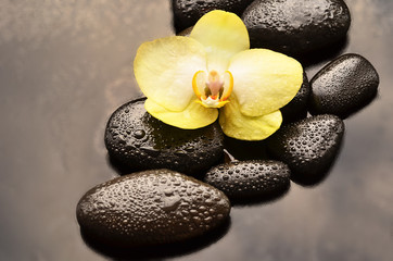 Spa concept. Flower  orchid and stones.