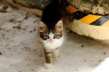 cat in natural pose