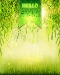 spring willow 3