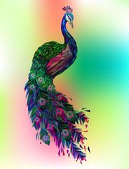 Vector polygonal peacock illustration.