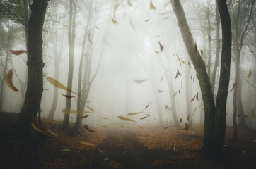 leafs blown by wind in misty forest