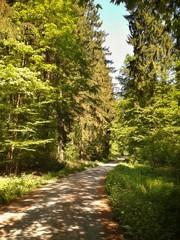 Wanderweg im Sommer