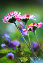 Beautiful colorful image about flower
