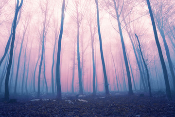 Wall Mural - Fantasy color foggy fairytale forest