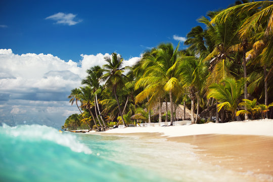 Palm trees on the tropical, wild beach