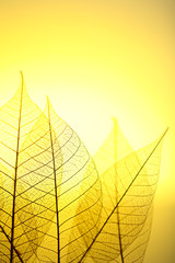 Garden Poster Decorative skeleton leaves Skeleton leaves on yellow background, close up