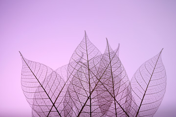 Poster Decoratief nervenblad Skeleton leaves on purple background, close up