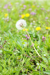 Wildflowers over green grass background