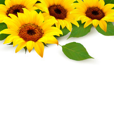 Wall Mural - Sunflowers Background With Sunflower And Leaves. Vector.