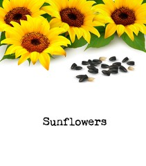 Wall Mural - Sunflowers background with sunflower seeds. Vector.