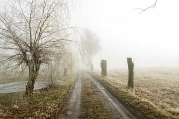 road in morning
