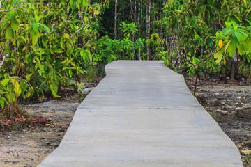 stone bridge in forest