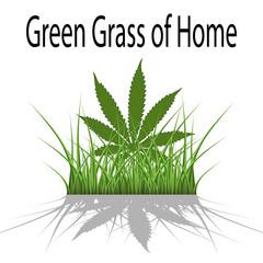 Green Grass of Home