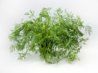 green bunch of fresh dill on a white background