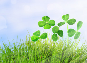 Clover leaves in grass on blue sky background