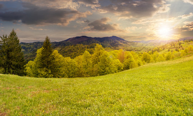 hillside meadow near forest in mountain at sunset