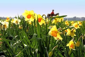 Entspannung im Frühling