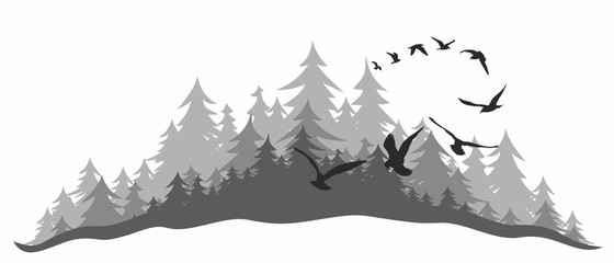 Coniferous forest with birds.