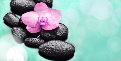 Spa concept. Flower pink orchid and  black stones.