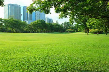 beautiful morning light in public park with green grass field an Wall mural