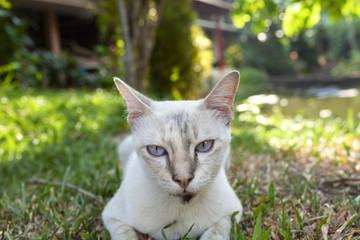 Closeup cat face in the garden