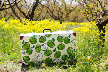 Suitcase in green grass on natural background