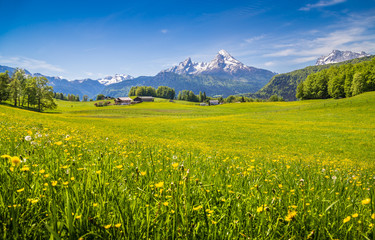 Wall Mural - Idyllic landscape in the Alps with green meadows and flowers