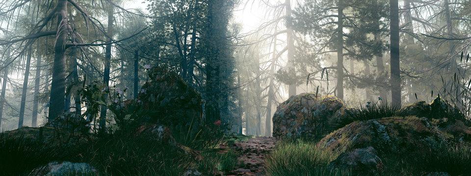 Un matin dans la forêt