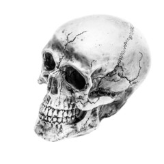 Still life,Black and white of human skull on white background, A