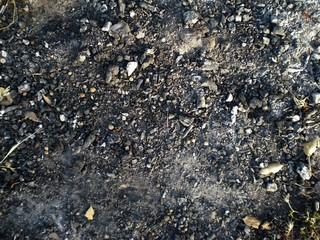 field floor texture