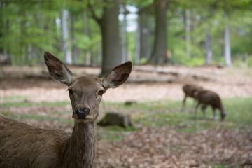 Wildpark Kaiserslautern