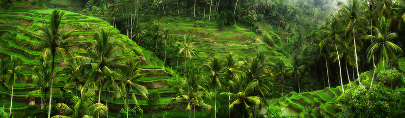Printed kitchen splashbacks Bali Rice fields near Ubud in Bali