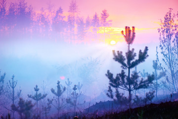 Wall Mural - Beautiful nature sunrise foggy landscape. Misty forest