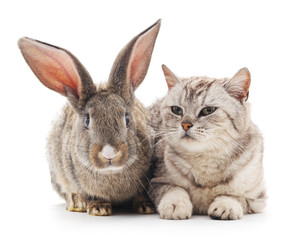 Сat and  rabbit.