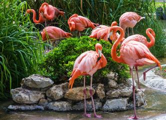 flamingofamilie in de dierentuin van Lissabon, Portugal
